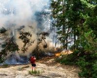 Skogsbrandbränning, löpeld som är nära upp på dagtid royaltyfri fotografi