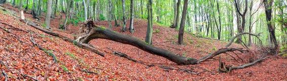 skogsbruk Fotografering för Bildbyråer