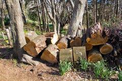 skogsbruk Royaltyfri Bild