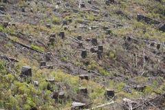 Skogsbruk som kalhuggas med trädstubbar Royaltyfri Bild