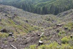 Skogsbrukkalhygge, tecken av återbeskogningen Fotografering för Bildbyråer