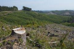 Skogsbrukkalhygge, tecken av återbeskogningen Arkivbild