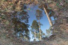 skogsbrukspegel Royaltyfri Bild