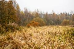 Skogsbryn Royaltyfri Bild