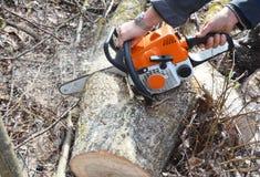 Skogshuggarehänder med bensinchainsawen som klipper det stupade trädet arkivbilder