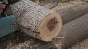 Skogshuggaren sågar och klipper ner träd och förgrena sig för bränsle långsam rörelse stock video