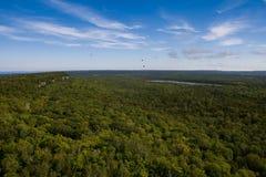 skogsikt Royaltyfria Foton