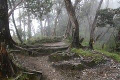 skogsikt Royaltyfri Fotografi