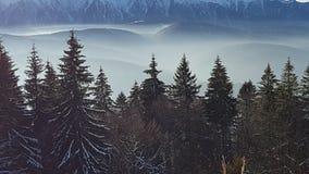 Skogsikt med berg i bakgrunden Arkivbild
