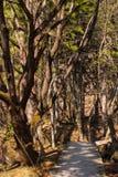 Skogslinga Royaltyfri Fotografi