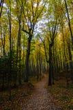 Skogslingan, i föreställt, vaggar medborgaren Lakeshore, Munising, MI Royaltyfri Fotografi