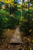 Skogslingan, i föreställt, vaggar medborgaren Lakeshore, Munising, MI Royaltyfria Bilder