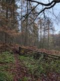 skogsmark arkivbilder