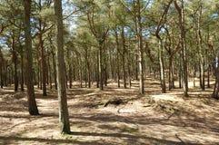 skogsmark Royaltyfri Bild