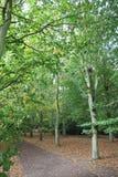 skogsmark Royaltyfria Bilder