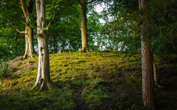 Skogsmark i Cumbria Arkivfoto