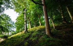 Skogsmark i Cumbria Royaltyfria Bilder