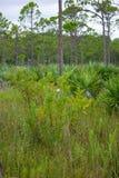 Skogsmark i södra Florida royaltyfri foto