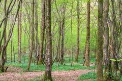 Skogsmark i vår Arkivbilder
