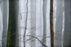 Skogsmark i vintermist royaltyfri bild
