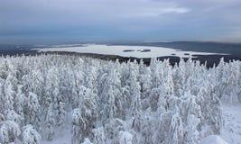 Skogsmark och sjö Royaltyfria Bilder