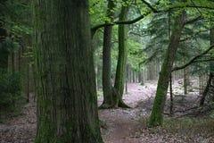 Skogsmark/skog med att fotvandra spåret royaltyfri bild