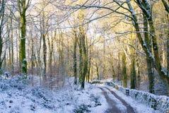Skogsmark walled spår och snö arkivbild