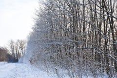 Skogsmarkbälte i vinter Royaltyfri Foto