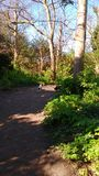 Skogsmarkbana Arkivfoto