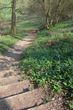 Skogsmarkbana i England under våren Arkivbild