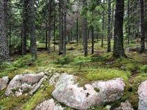 Skogsmarken går Arkivfoto