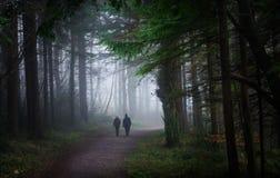 Skogsmarken går Fotografering för Bildbyråer
