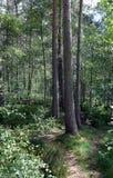 Skogsmarken går, Kincardine nolla-` Neil, kungliga Deeside, Skottland Arkivfoton