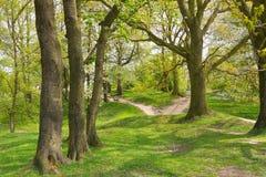 Skogsmarken går till och med stridfältet för kulle 60 nära Ypres Fotografering för Bildbyråer
