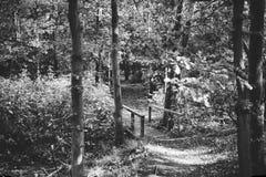 skogsmarker Royaltyfri Foto