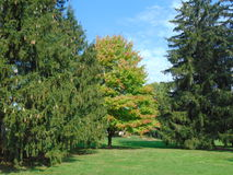 skogsmarker Royaltyfria Bilder