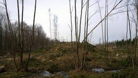 skogsmarker Arkivbilder