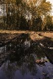 Skogsmarker i Lelystad Royaltyfri Fotografi