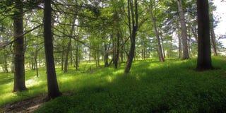 Skogsmarker i lilla viken Fotografering för Bildbyråer