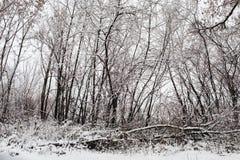 Skogsmarklandskap med dimma under ett snöfall Royaltyfri Foto