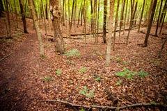 Skogsmarkmorgon Fotografering för Bildbyråer