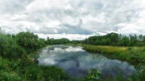 Skogsmarkmyr Blå flod för skog clouds skyen Sommartid Royaltyfri Fotografi