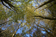 Skogsmarkröjning royaltyfri fotografi