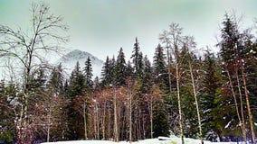 Skogsmarkskog Royaltyfri Fotografi