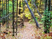Skogsmarkslinga Royaltyfri Bild