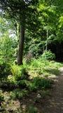 Skogsmarkslinga Arkivfoto