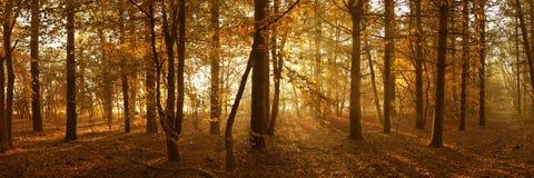 SkogsmarkSunburst Fotografering för Bildbyråer