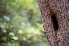 Skogsmarkträd med fördjupningen och grön lövverkbakgrund arkivfoton
