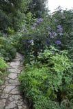 Skogsmarkträdgård med vanliga hortensior Royaltyfri Bild