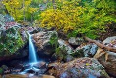 Skogsmarkvattenfall och nedgånglövverk Royaltyfria Bilder